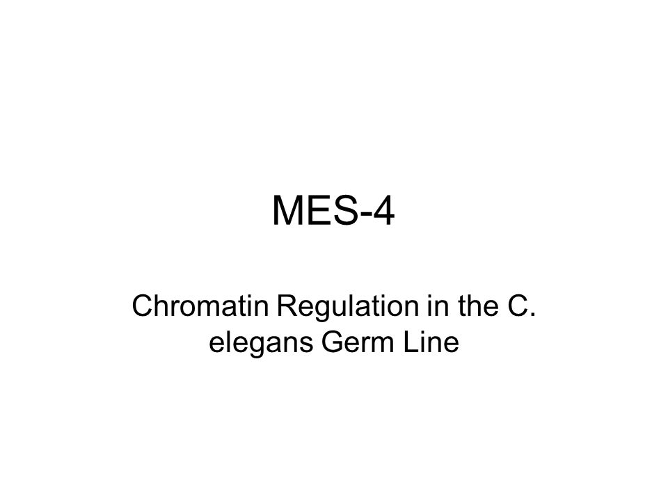 Chromatin Regulation in the C. elegans Germ Line
