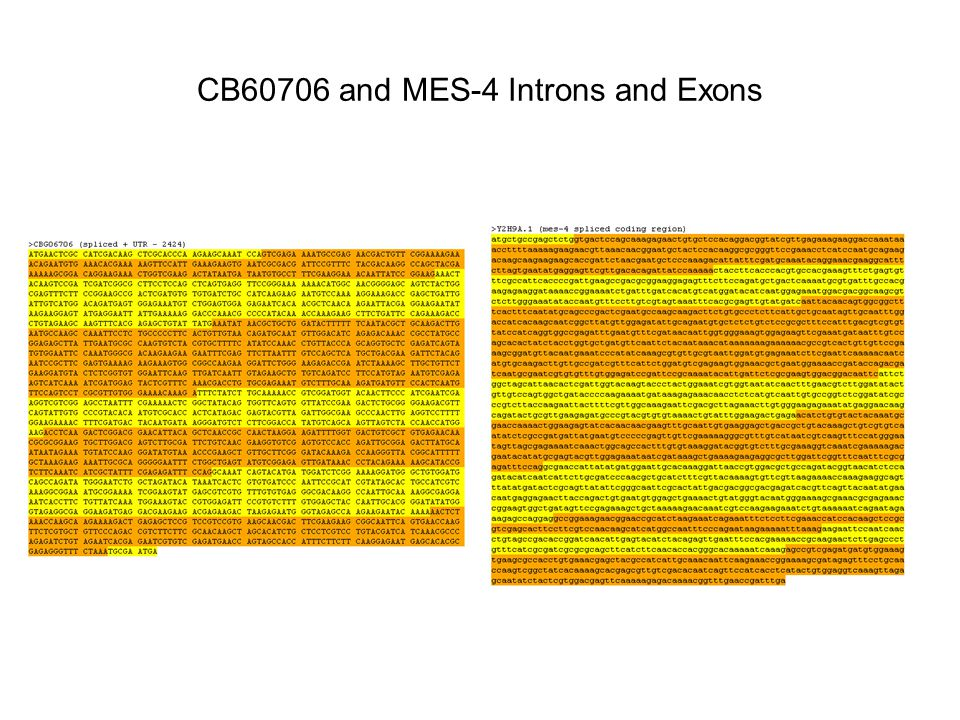 CB60706 and MES-4 Introns and Exons