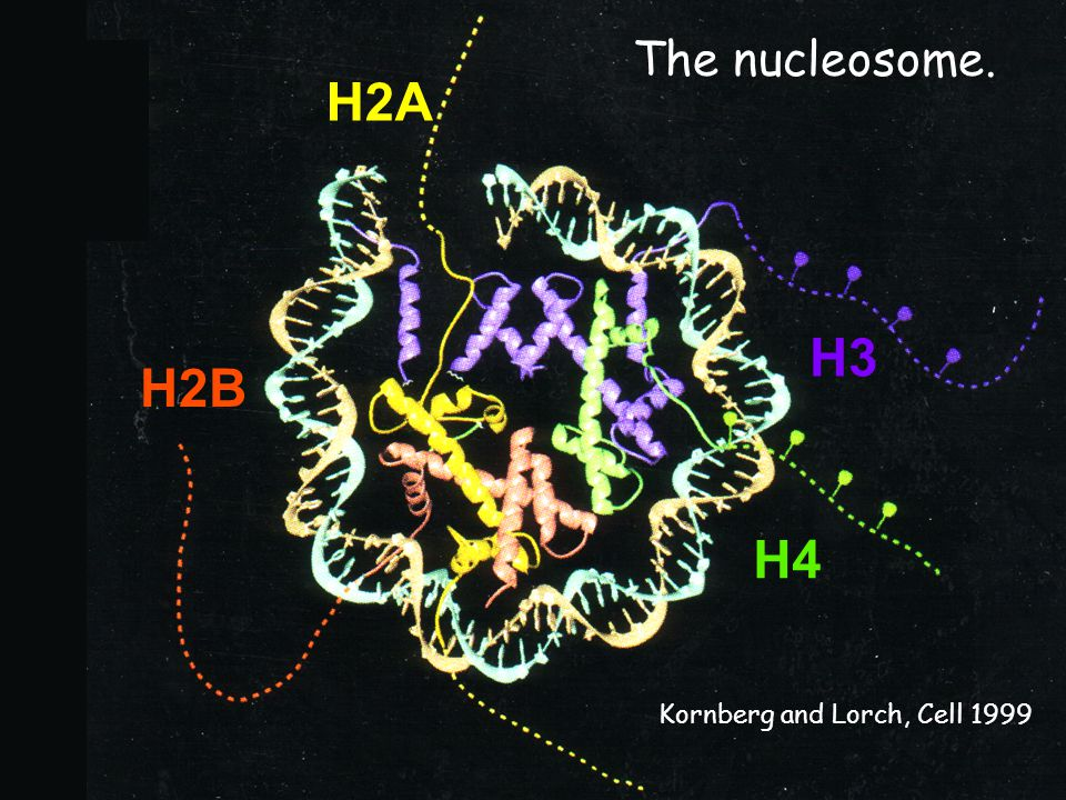H2A H3 H2B H4 The nucleosome. Get better resolution! Ref.