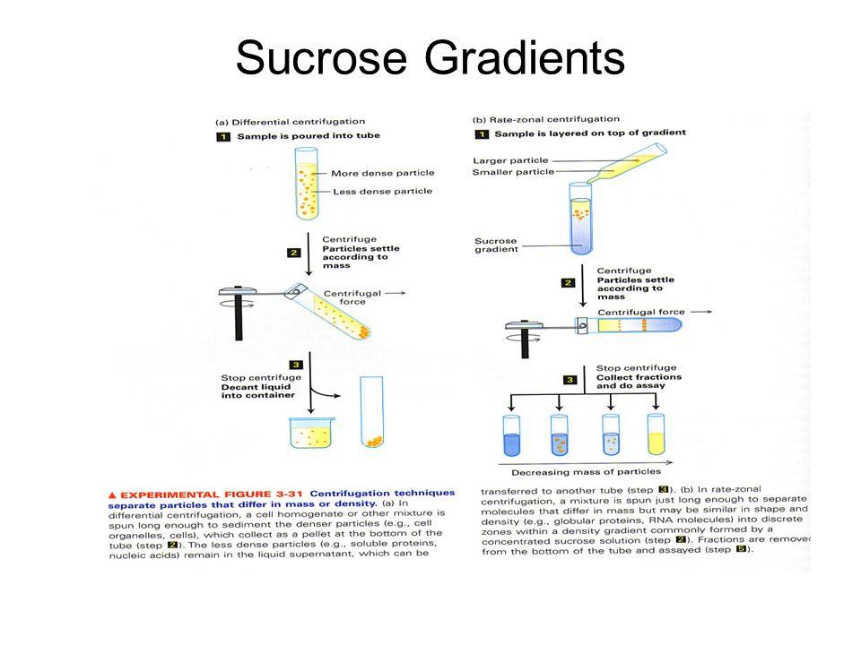 Sucrose Gradients