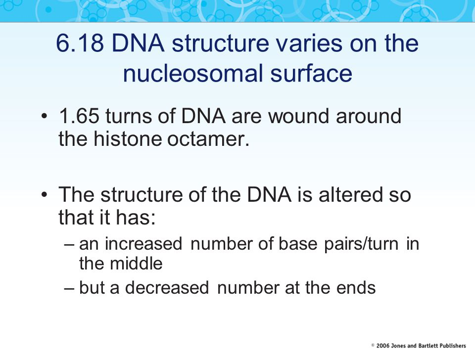 6.18 DNA structure varies on the nucleosomal surface