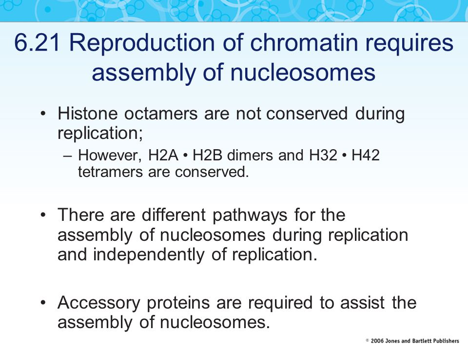 6.21 Reproduction of chromatin requires assembly of nucleosomes