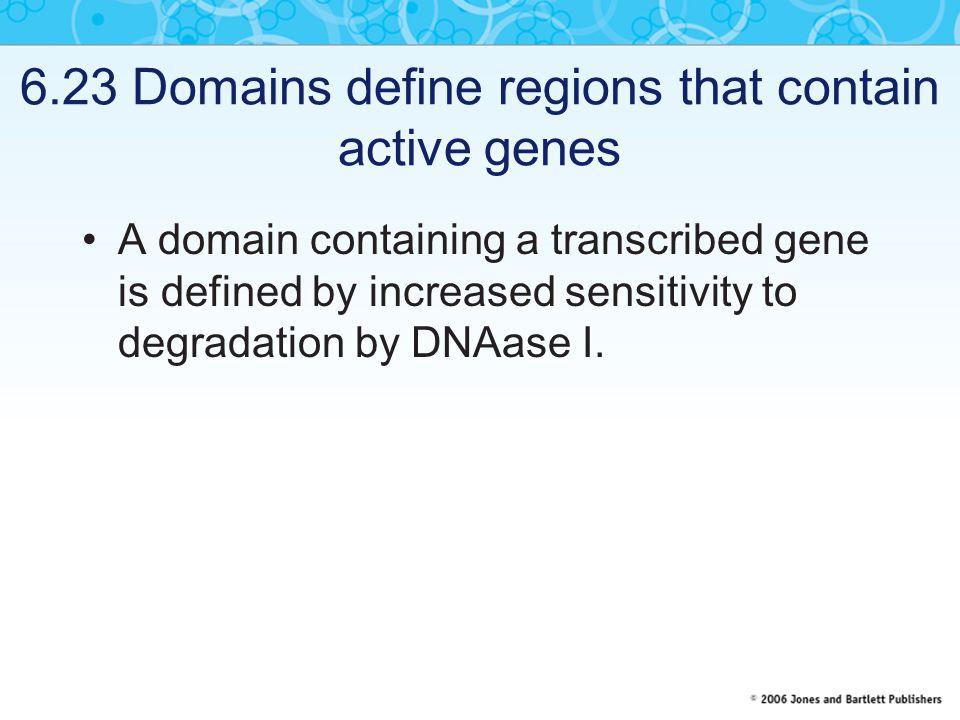 6.23 Domains define regions that contain active genes