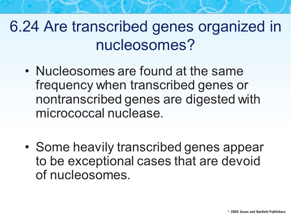 6.24 Are transcribed genes organized in nucleosomes