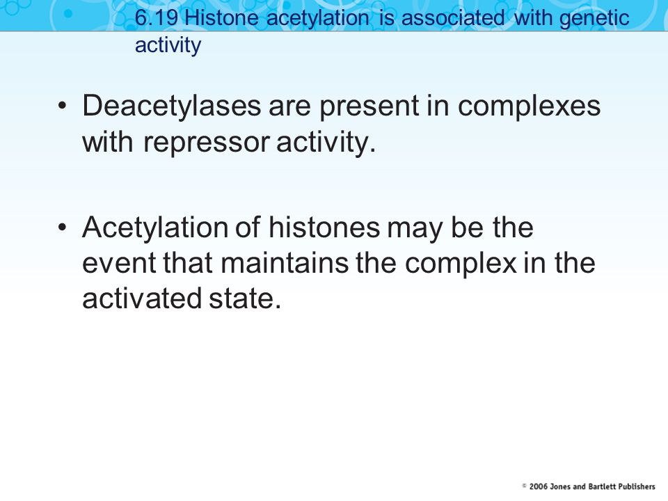 Deacetylases are present in complexes with repressor activity.