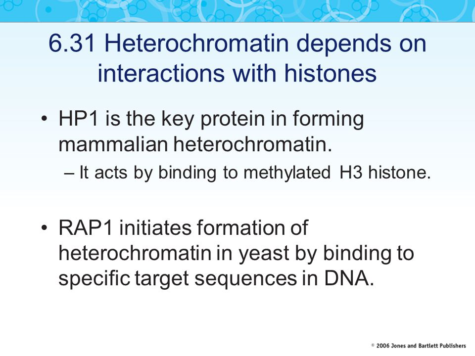 6.31 Heterochromatin depends on interactions with histones