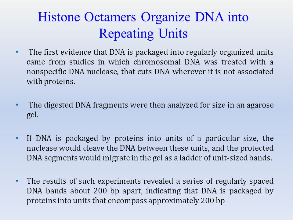 Histone Octamers Organize DNA into Repeating Units