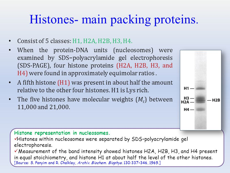 Histones- main packing proteins.