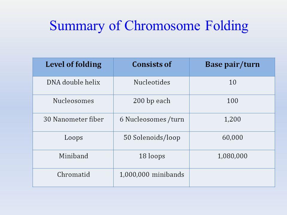 Summary of Chromosome Folding