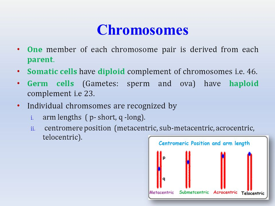 One member of each chromosome pair is derived from each parent.