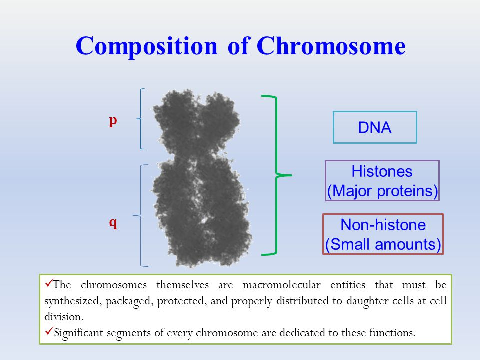 Composition of Chromosome