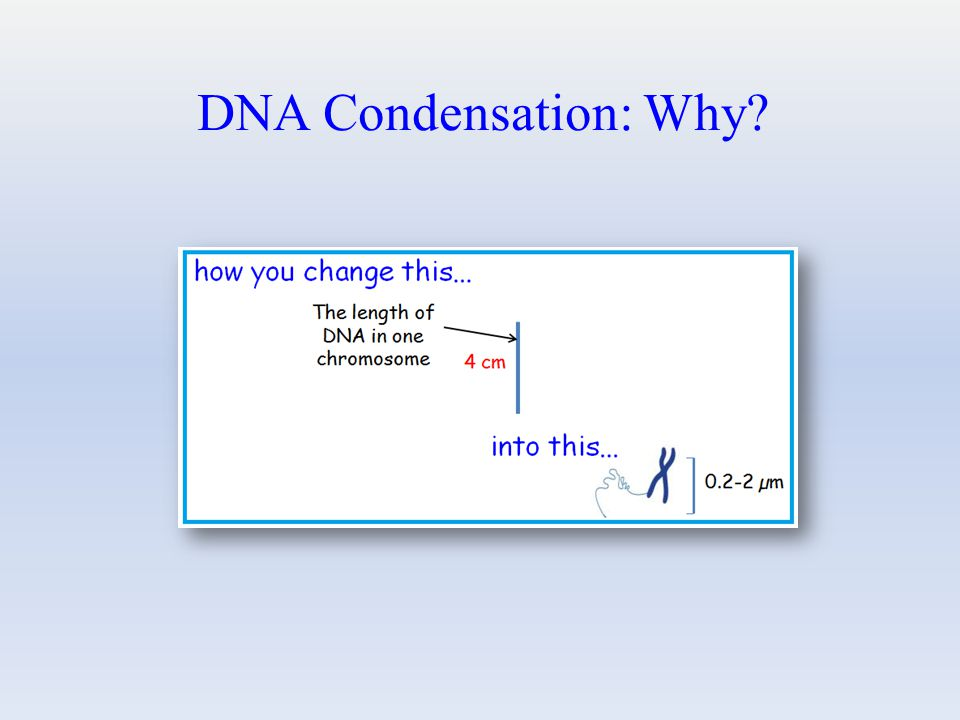 DNA Condensation: Why