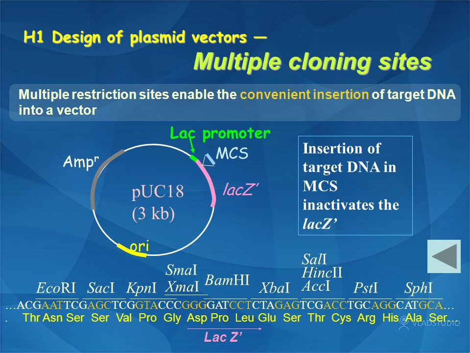 H1 Design of plasmid vectors — Multiple cloning sites