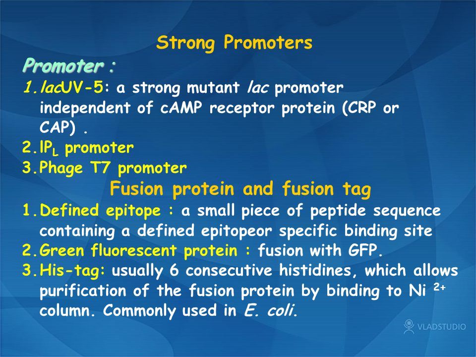 Fusion protein and fusion tag