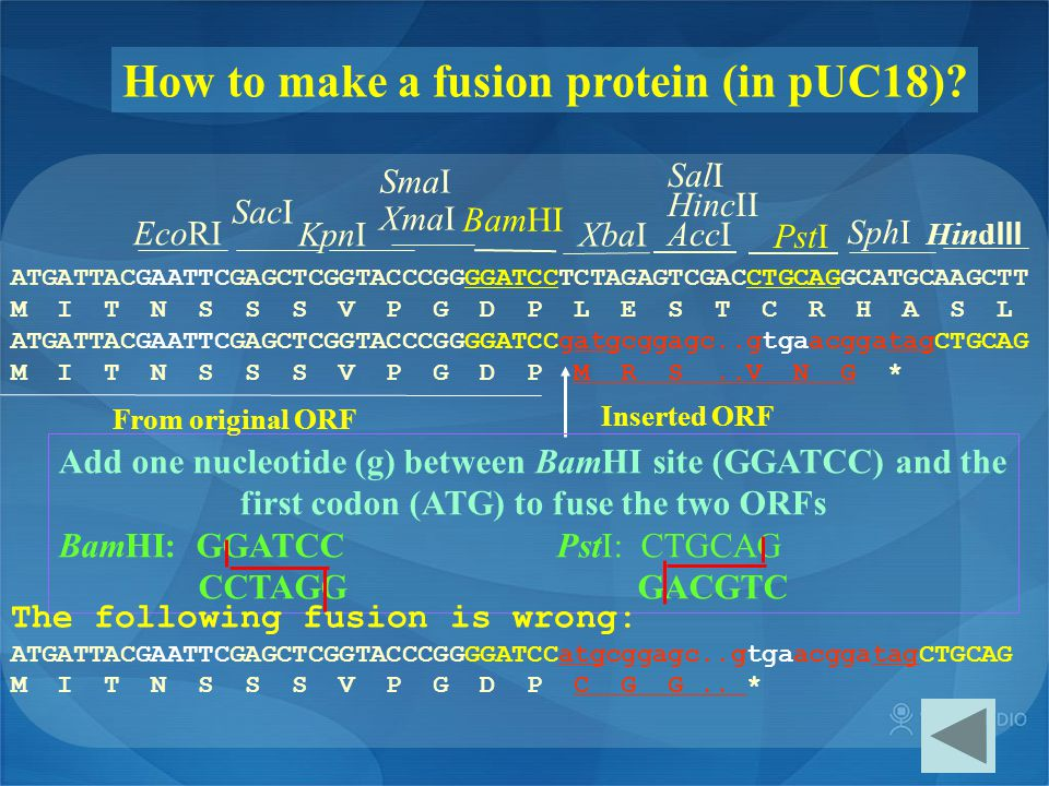 How to make a fusion protein (in pUC18)