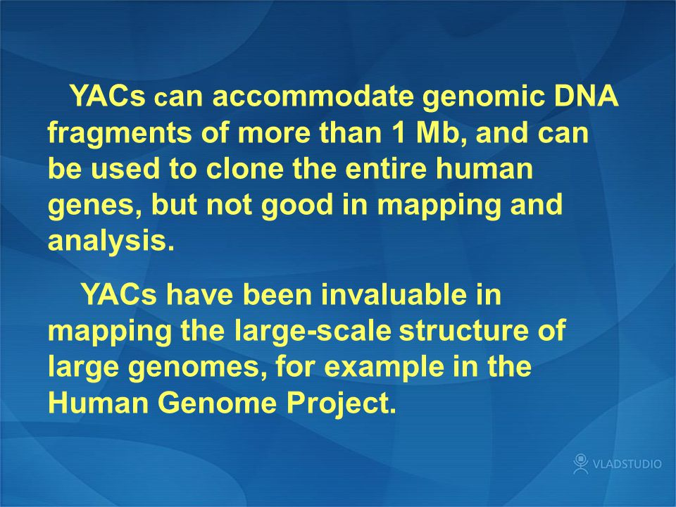 YACs can accommodate genomic DNA fragments of more than 1 Mb, and can be used to clone the entire human genes, but not good in mapping and analysis.