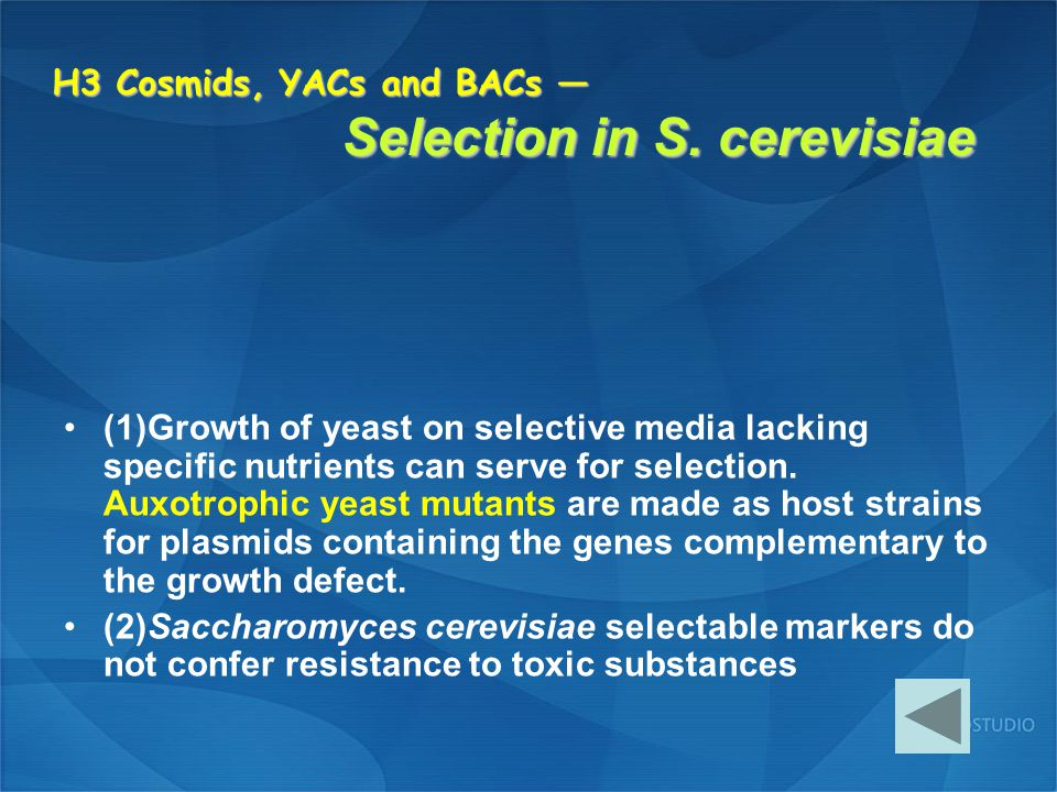 H3 Cosmids, YACs and BACs — Selection in S. cerevisiae