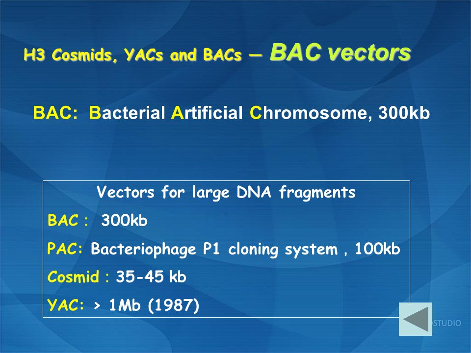 H3 Cosmids, YACs and BACs — BAC vectors