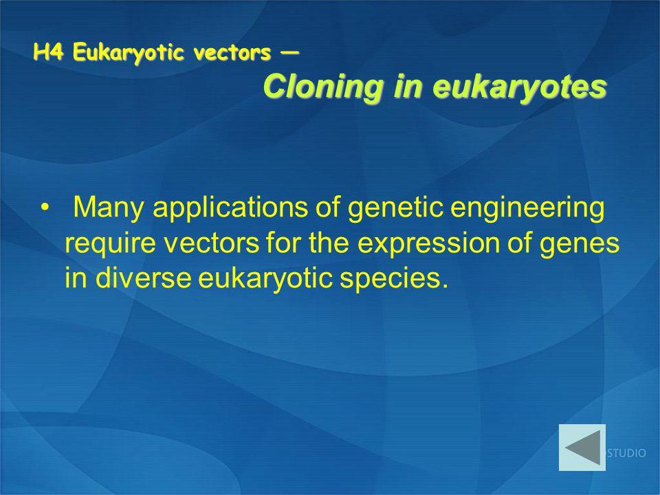 H4 Eukaryotic vectors — Cloning in eukaryotes