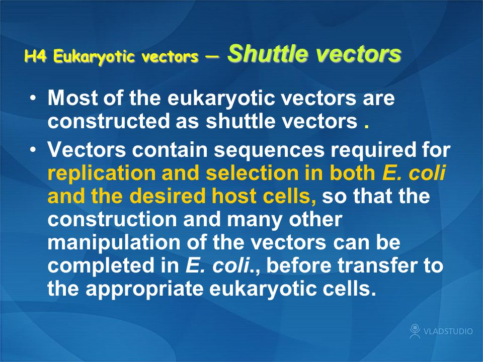 H4 Eukaryotic vectors — Shuttle vectors