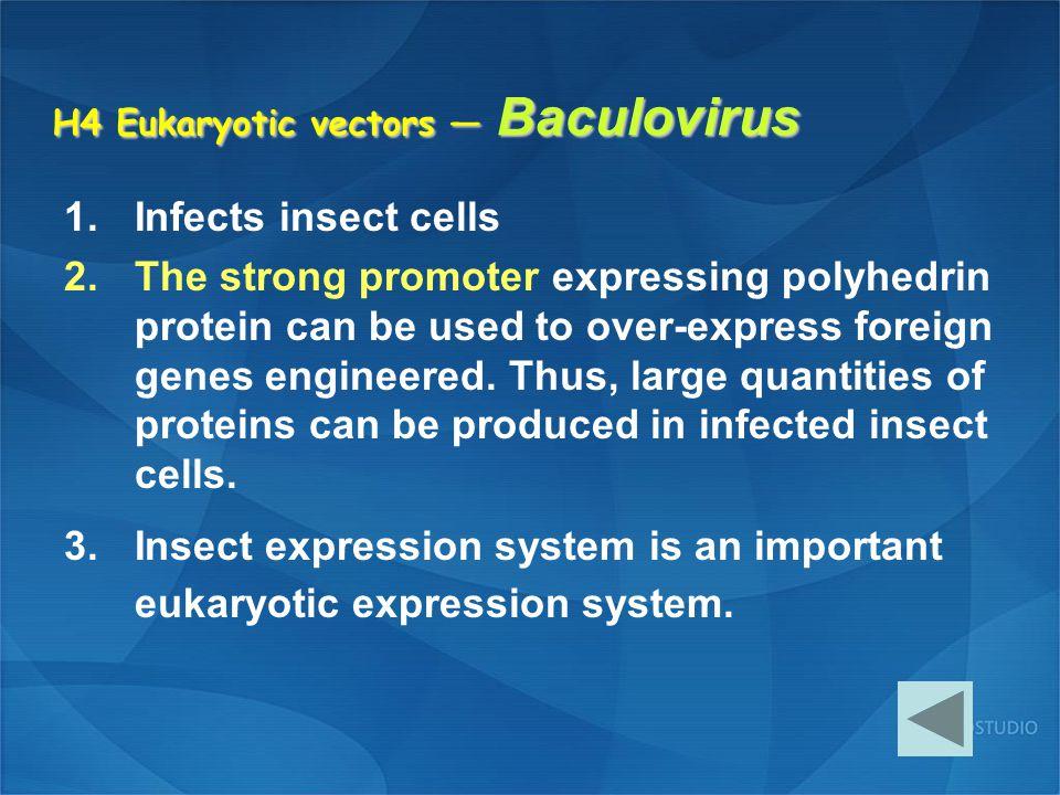H4 Eukaryotic vectors — Baculovirus