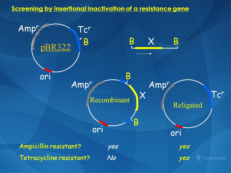 B X B pBR322 B Ampr Tcr X ori Recombinant Religated