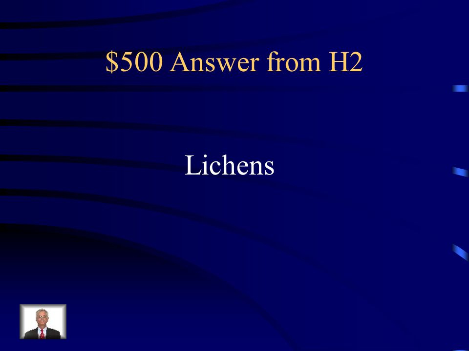 $500 Answer from H2 Lichens