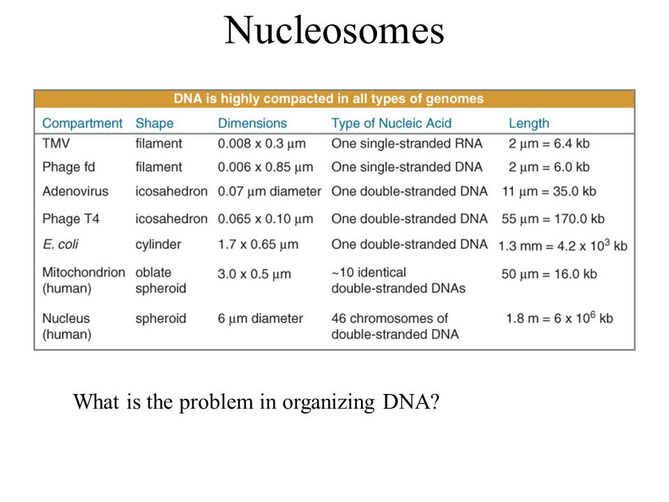 Nucleosomes What is the problem in organizing DNA