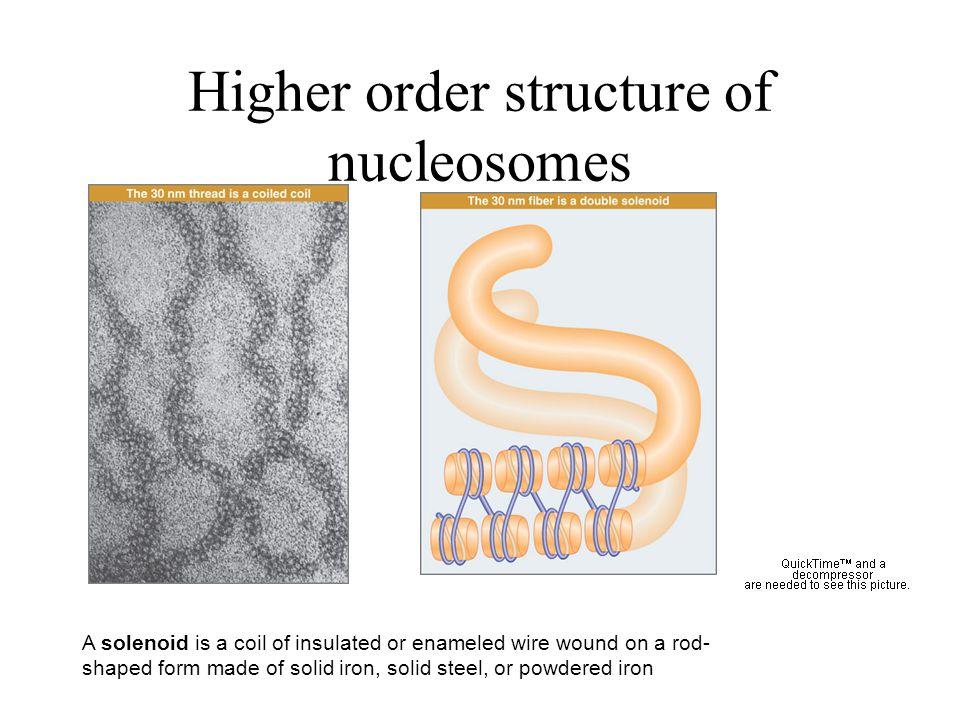 Higher order structure of nucleosomes