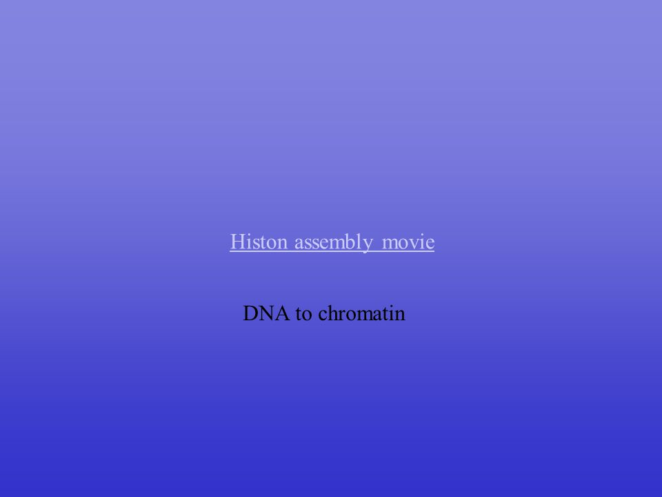 Histon assembly movie DNA to chromatin