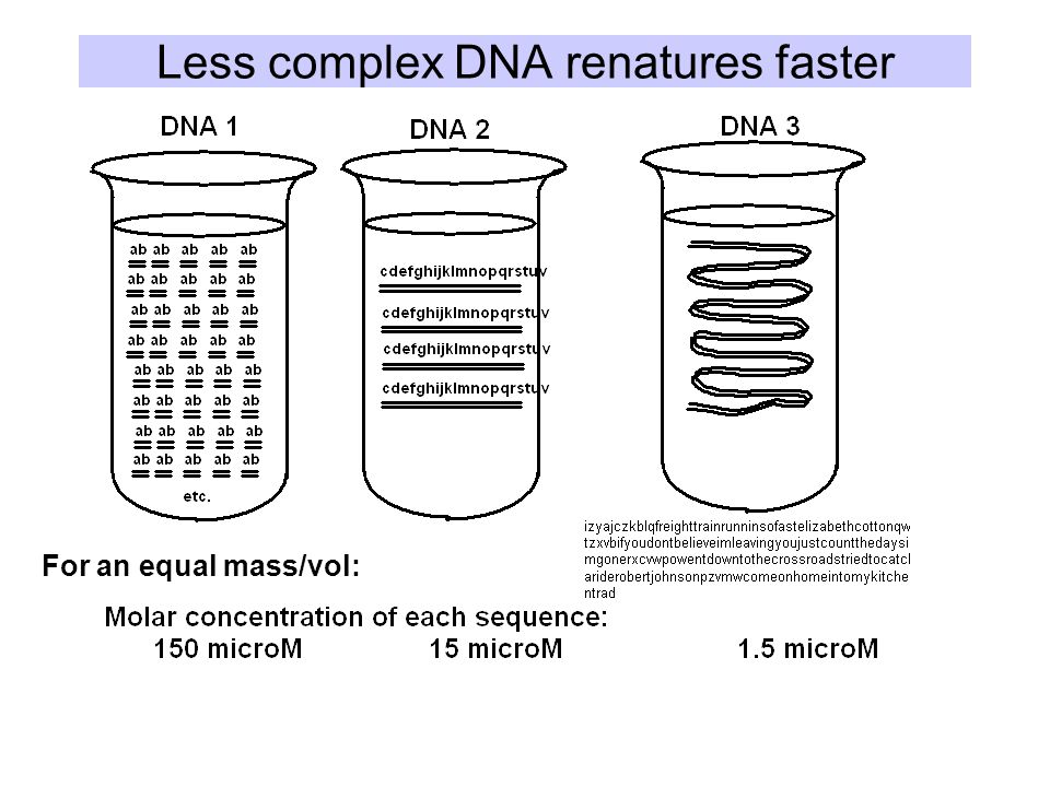 Less complex DNA renatures faster