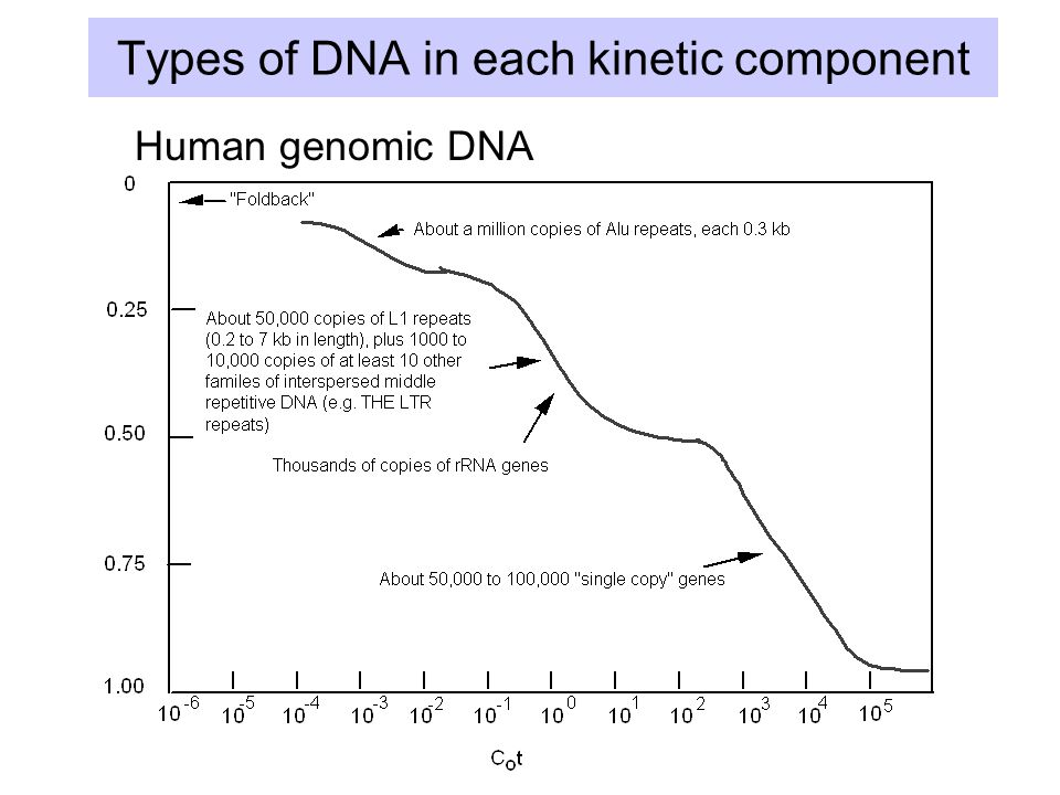 Types of DNA in each kinetic component