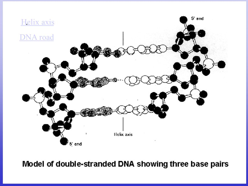 Helix axis DNA road