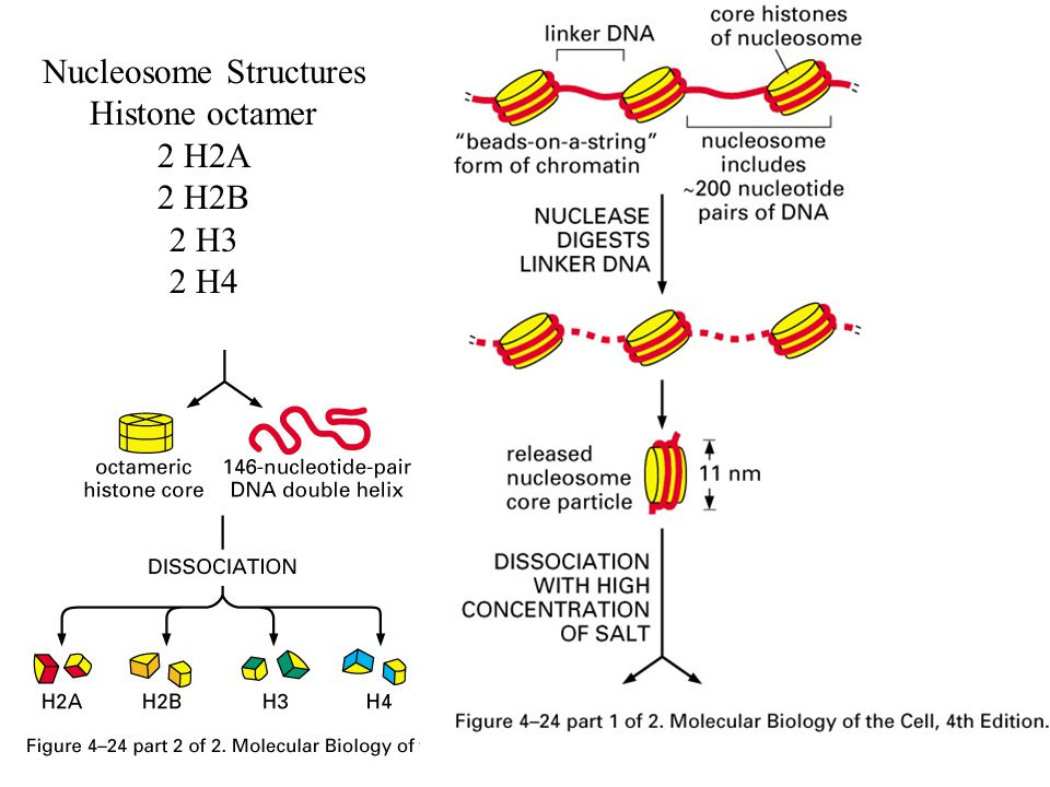 Nucleosome Structures
