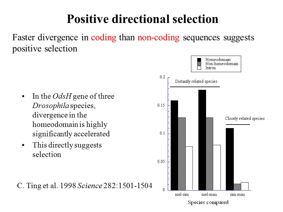 Positive directional selection