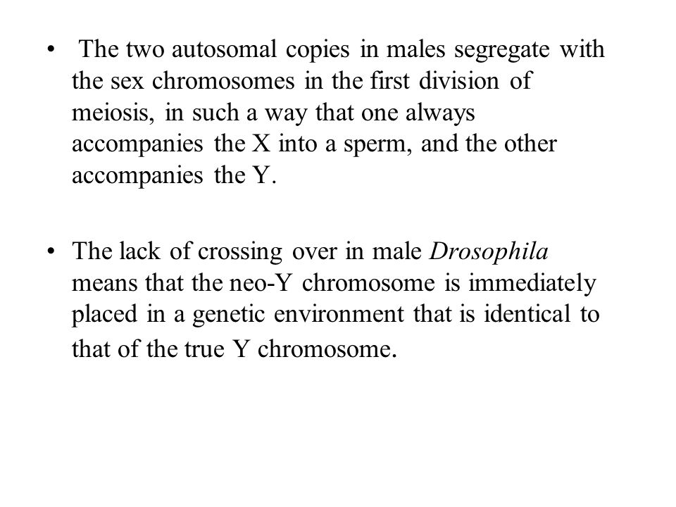 The two autosomal copies in males segregate with the sex chromosomes in the first division of meiosis, in such a way that one always accompanies the X into a sperm, and the other accompanies the Y.