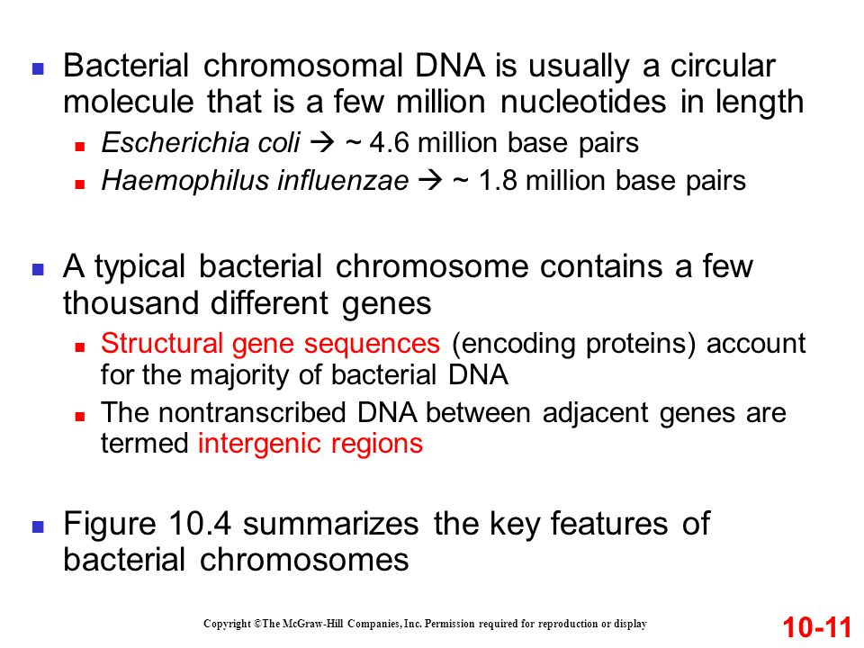 A typical bacterial chromosome contains a few thousand different genes