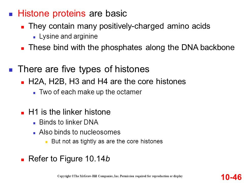 Histone proteins are basic