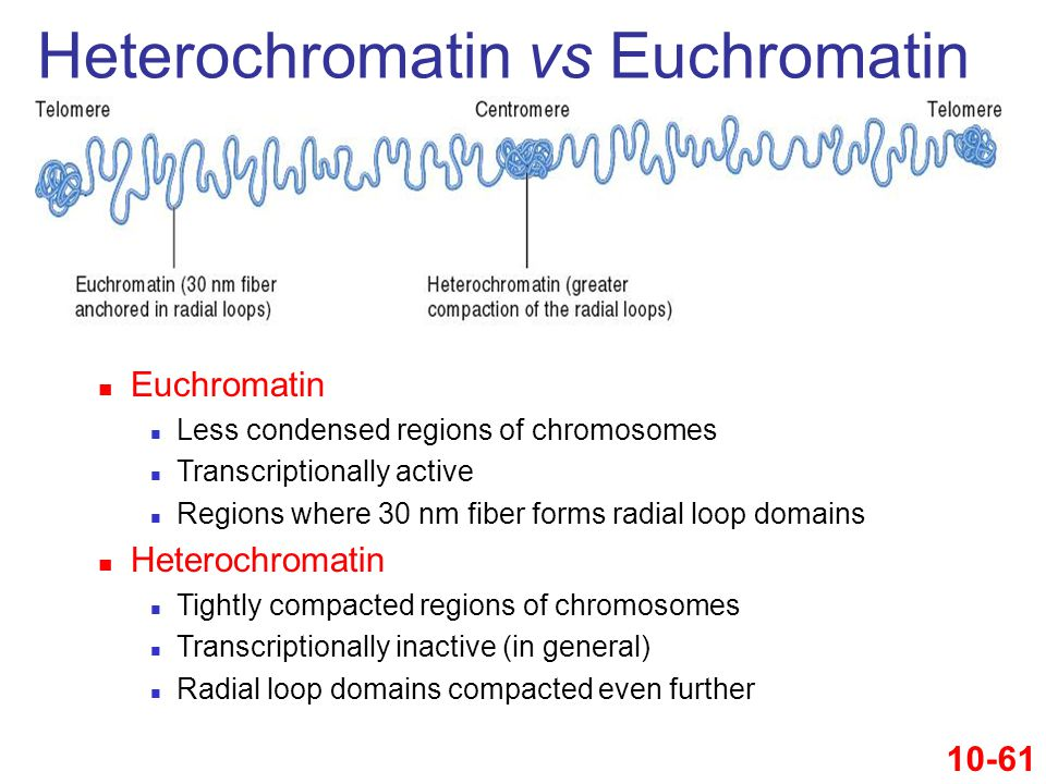 Heterochromatin vs Euchromatin