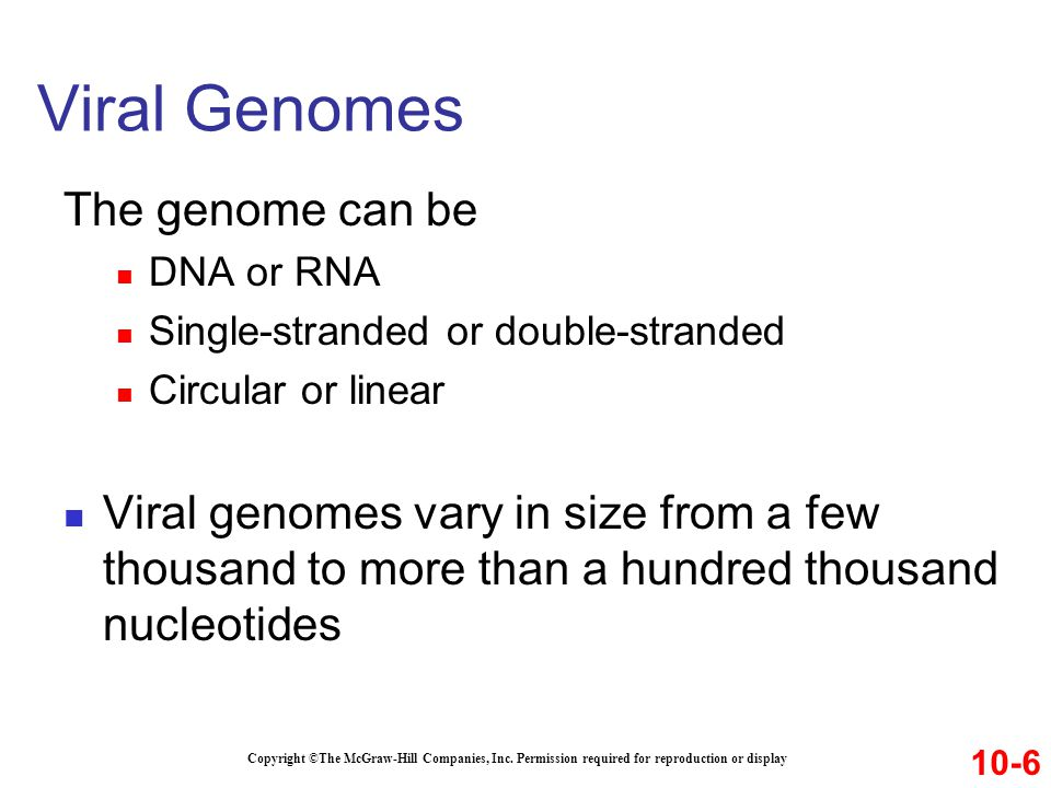 Viral Genomes The genome can be