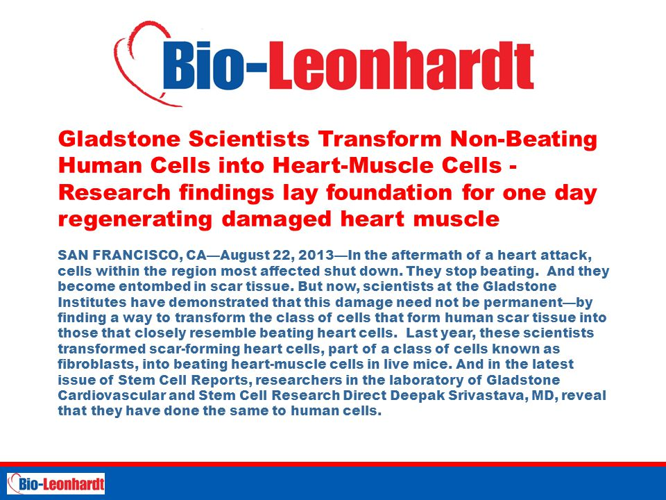 Gladstone Scientists Transform Non-Beating Human Cells into Heart-Muscle Cells - Research findings lay foundation for one day regenerating damaged heart muscle SAN FRANCISCO, CA—August 22, 2013—In the aftermath of a heart attack, cells within the region most affected shut down.