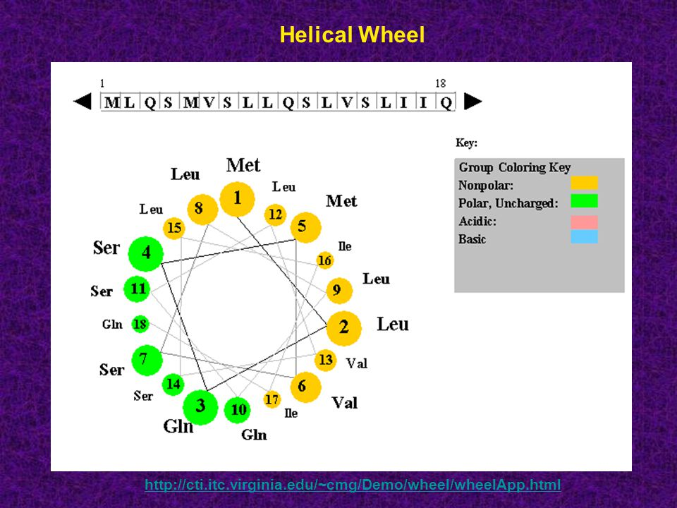 Helical Wheel http://cti.itc.virginia.edu/~cmg/Demo/wheel/wheelApp.html