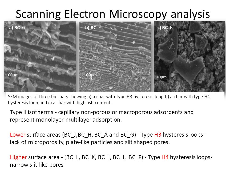 Scanning Electron Microscopy analysis