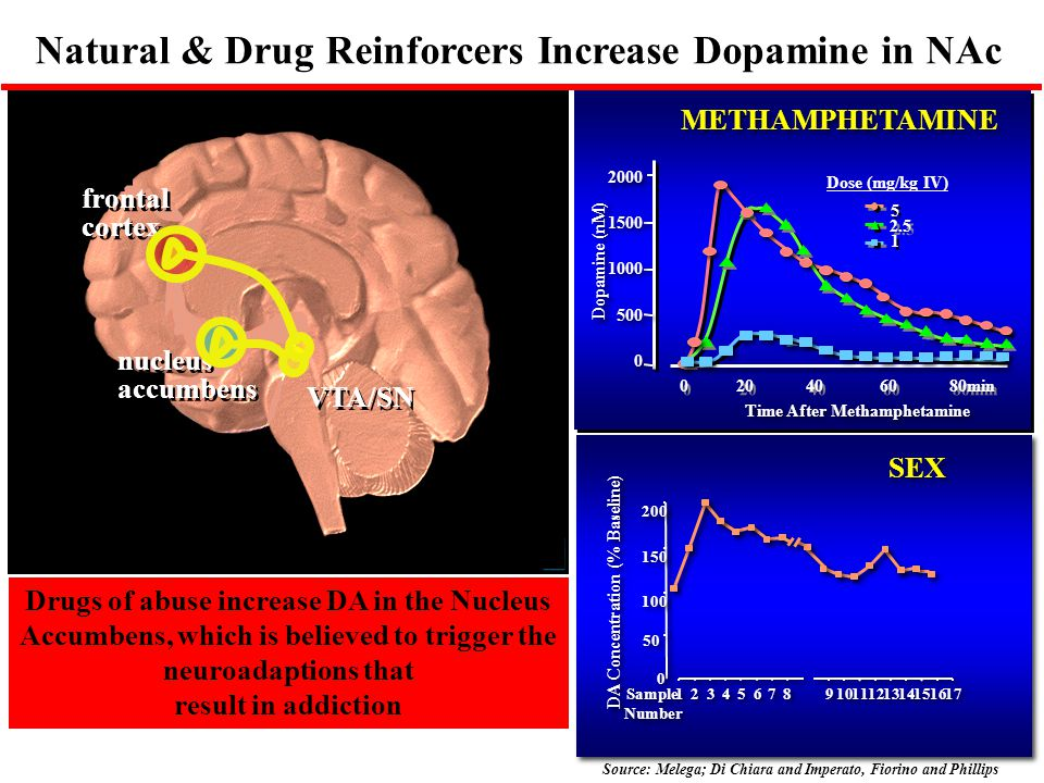 Natural & Drug Reinforcers Increase Dopamine in NAc