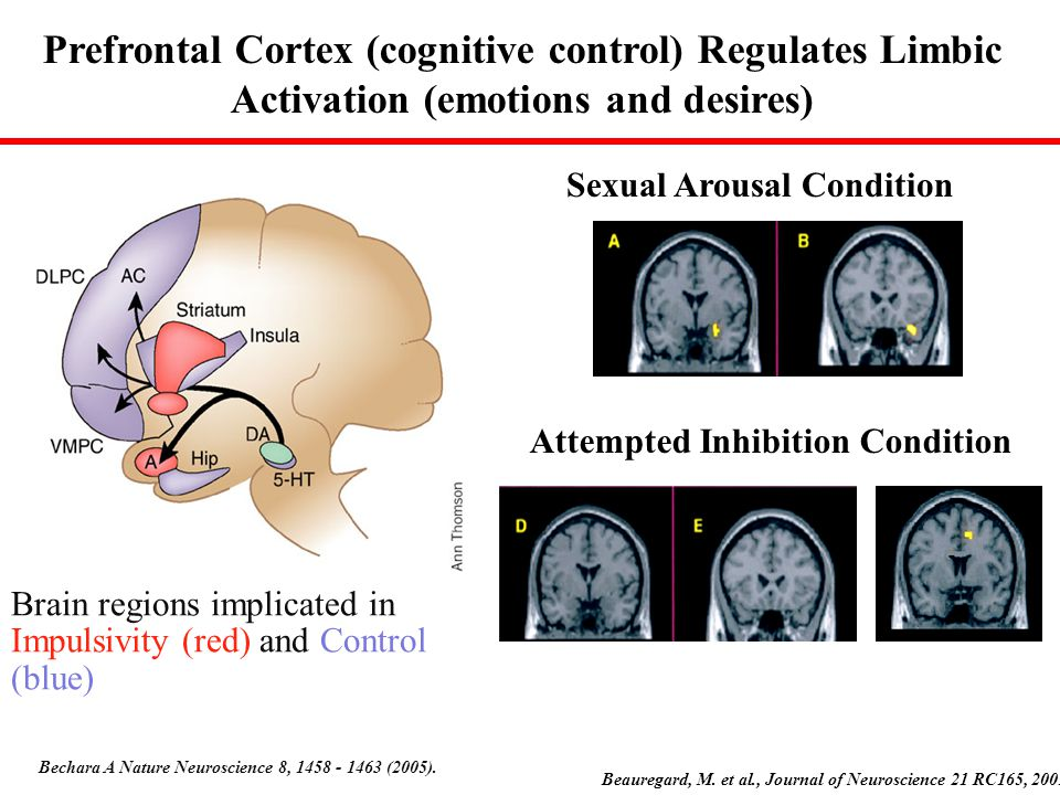 Brain regions implicated in Impulsivity (red) and Control (blue)