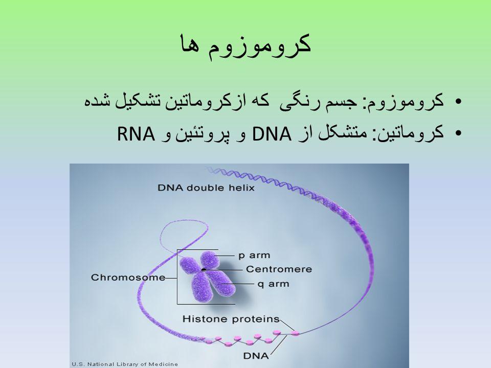کروموزوم ها کروموزوم: جسم رنگی که ازکروماتین تشکیل شده