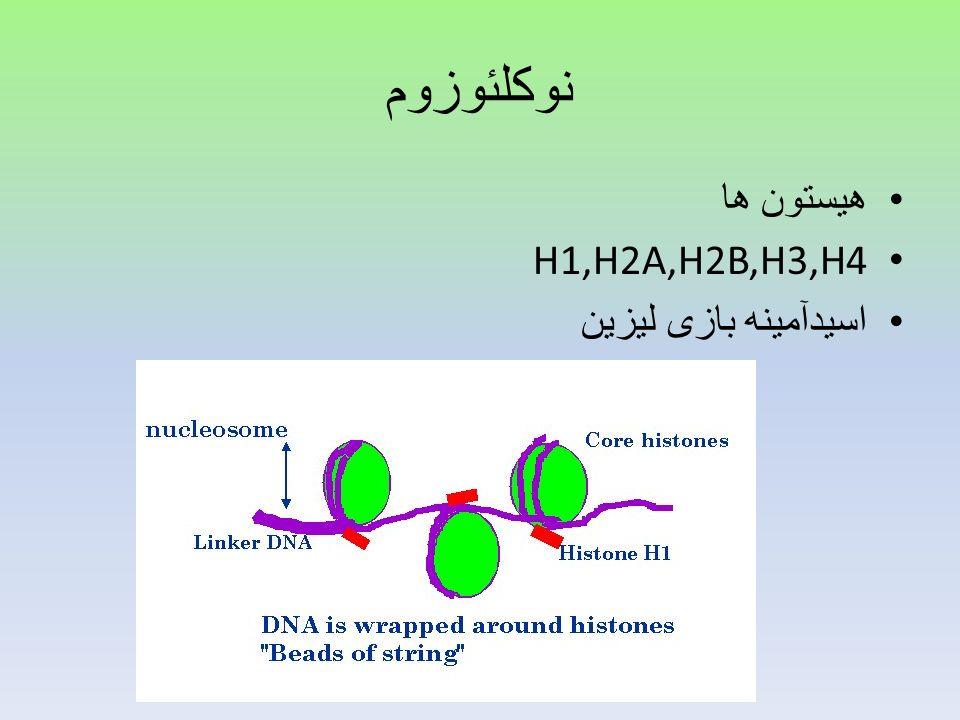 نوکلئوزوم هیستون ها H1,H2A,H2B,H3,H4 اسیدآمینه بازی لیزین