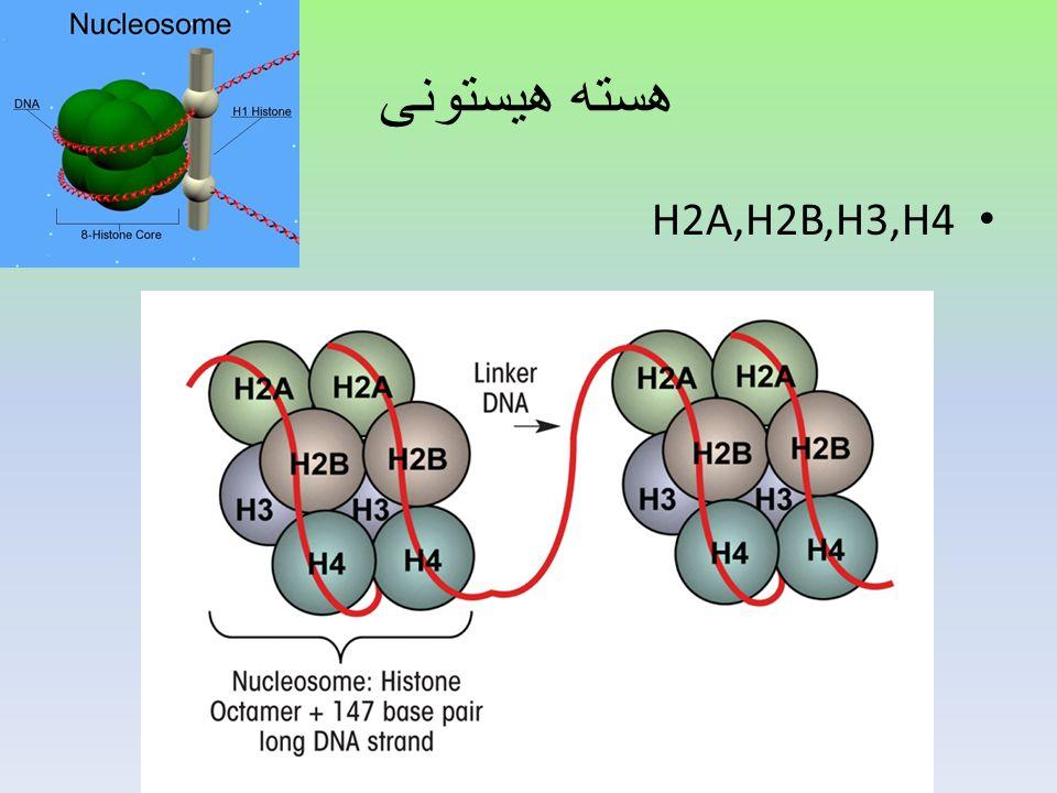 هسته هیستونی H2A,H2B,H3,H4