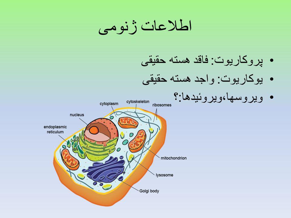 اطلاعات ژنومی پروکاریوت: فاقد هسته حقیقی یوکاریوت: واجد هسته حقیقی
