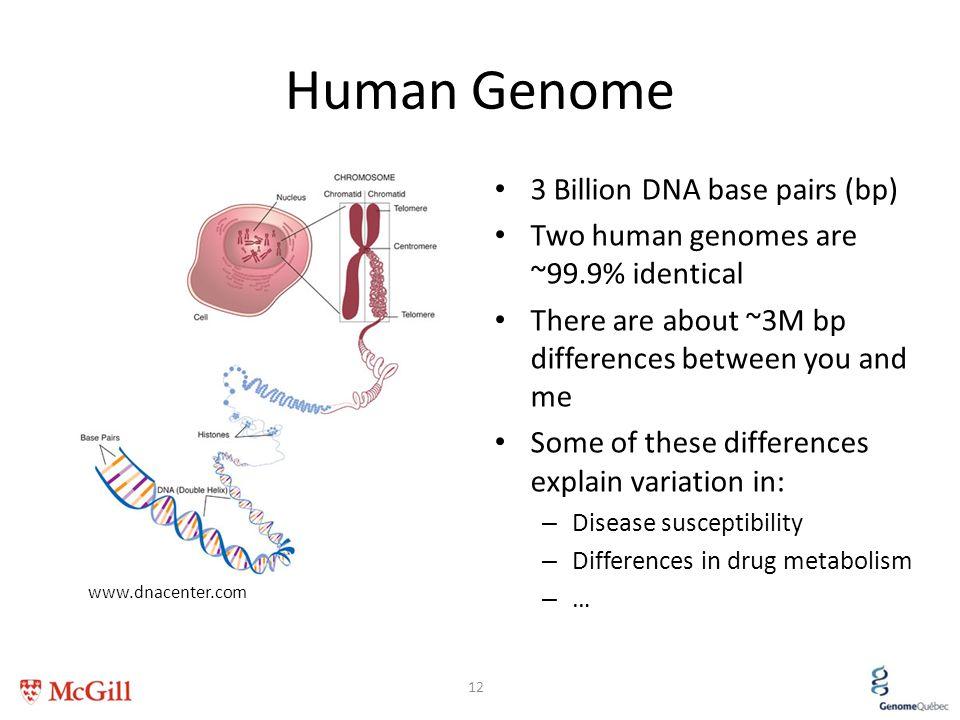 Human Genome 3 Billion DNA base pairs (bp)